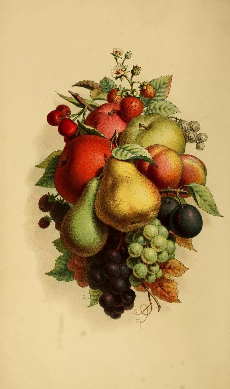 картинки овощей и фруктов для декупажа это совершенно