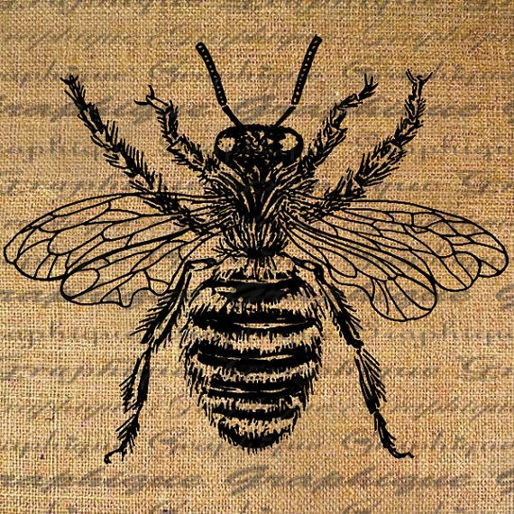 Large Bumble Bee Digital Image Download Sheet
