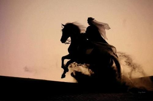 Arab horse and rider in the desert