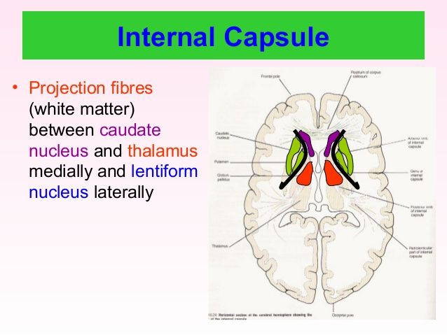 Image result for internal capsule