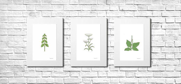 Pan Toti (Mr. Toti) Trzy plakaty w białych kartonowych passe-partout  Zielnik Pana Totiego, to zbiór drzewek, krzaczków i kwiatków z Wyspy Pana Totiego. Pokrzywa, krwawnik, babka.  http://pl.dawanda.com/shop/KolekcjaPanToti https://pl-pl.facebook.com/kolekcjaPanToti/