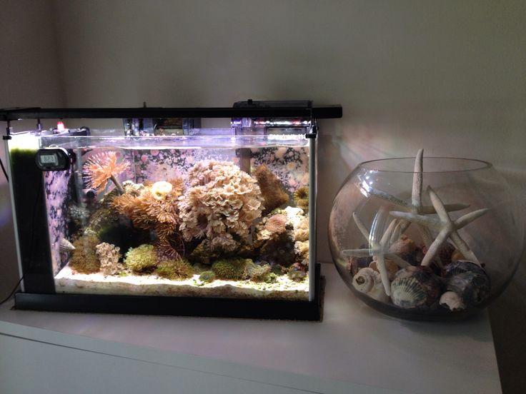 268 best ideas about nano reef aquariums on pinterest for Aquarium recifal nano