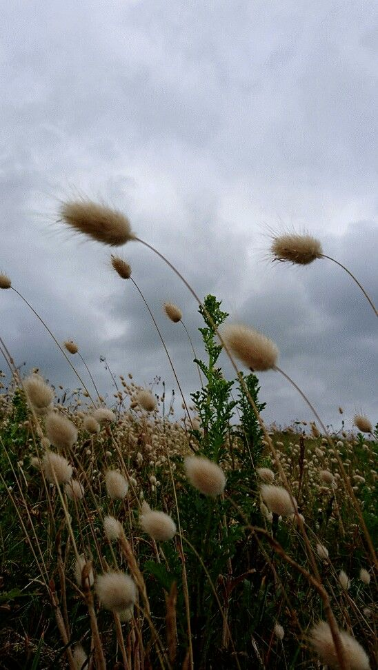 Un peu de douceur dans mon gris breton...  #finisterenord #bzh #Bretagne