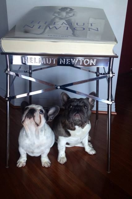 fan mail by Holly Nonorgues Frenchie loving Helmut Newton