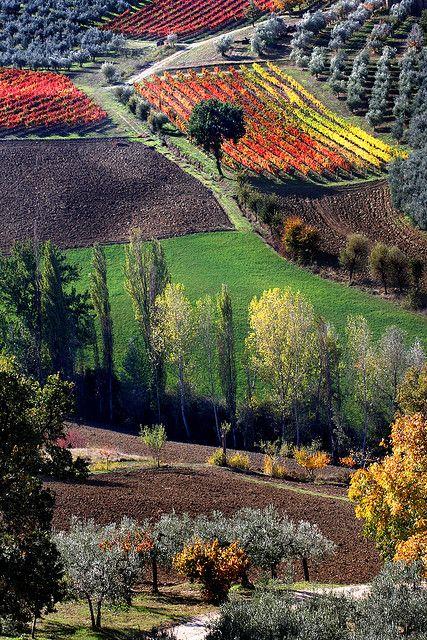La Toscana in autunno indossa una livrea coloratissima e pulsante di vita.
