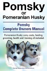 A Pomsky puppy is without a doubt one of the most dangerous sights a dog lover could ever lay eyes upon. Simply because of the fact they are so darn cute.