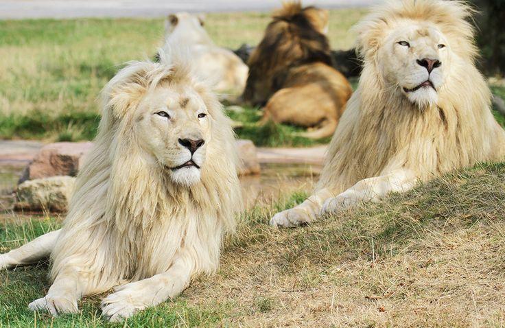 Tiere im Safaripark - Zoo Safaripark Stukenbrock