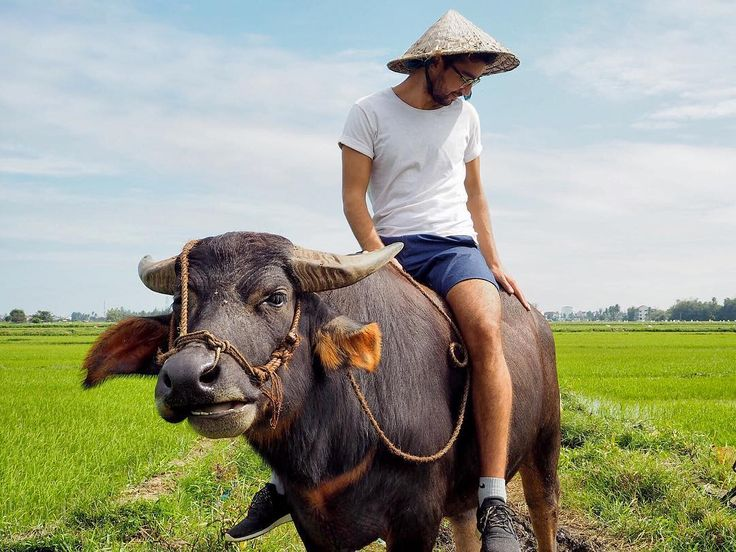 F A R M E R. Dating with a nice buffalo throught the rice fields. Thanks buddy for this incredible moment!  #delicieusevie #blogger #travel #instagram #instatravel #ricefield #vietnam #hoian #countryside #wu_asia #theoutdoorfolk #thegreatoutdoors #seetheworld #discoverearth #animallovers #buffalo #wanderlust #peopleoftravel #boyfriend #freedomthinkers #adventurethatislife #travelpicsdaily #lifeofadventure #exploreeverything #alldayexploring #naturelshot #animal by delicieusevie