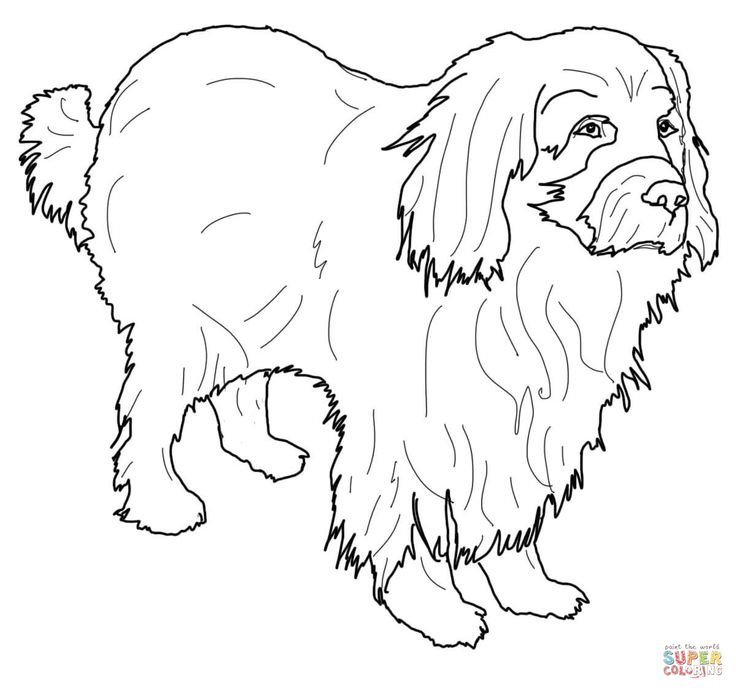 newfoundland coloring pages - photo#26