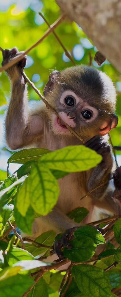 Baby monkey gnawing on twig. What a cutie.