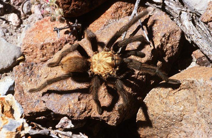 Mex 2002 - Cacti Mexico