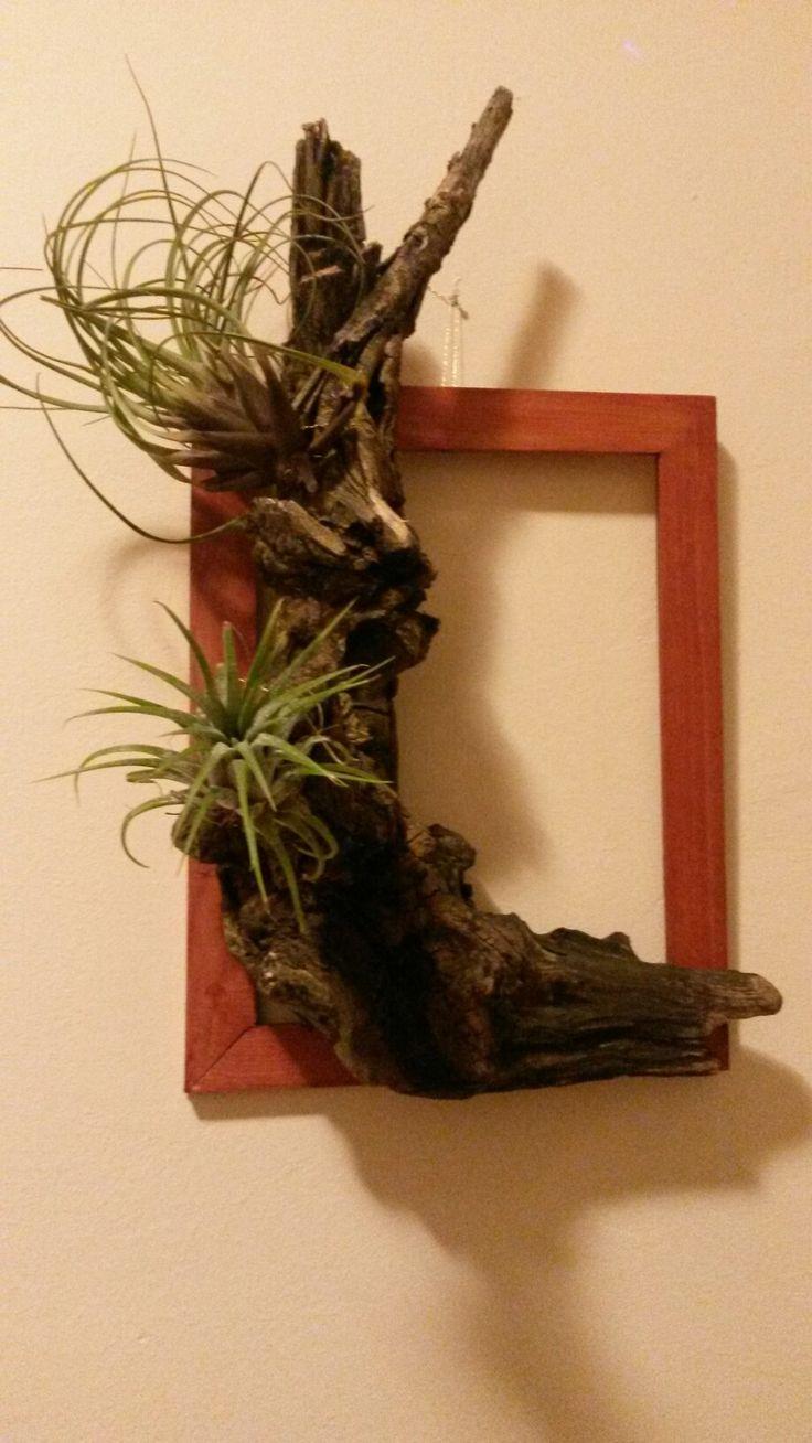 Tillandsia picture frame on a piece of vine