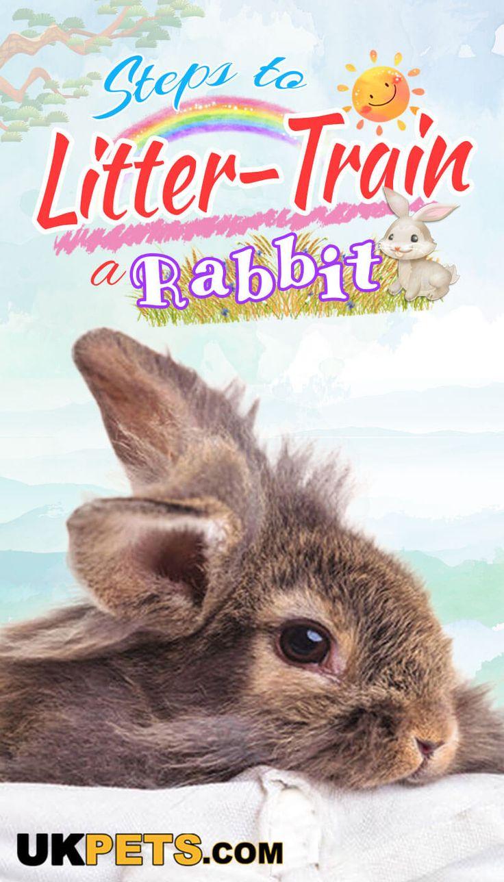 How to LitterTrain a Rabbit? Litter training, Rabbit