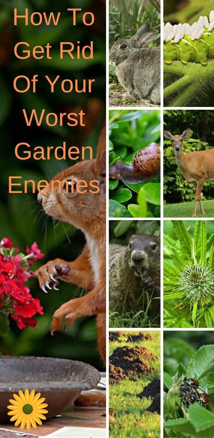 How To Get Rid Of Your Worst Garden Enemies, No Matter How Bad They Are