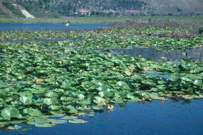Τοπίο μοναδικής ομορφιάς! H μεγαλύτερη σε έκταση λίμνη με νούφαρα στην Ελλάδα που.. δεν θυμίζει Ελλάδα