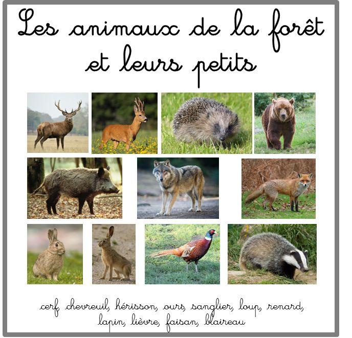 Sehr Les 25 meilleures idées de la catégorie Animaux de la forêt sur  FF77