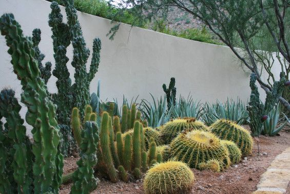 House of Desert Gardens in Paradise Valley AZ. Colwell Shelor Landscape Architecture