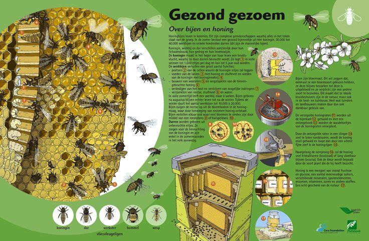 prentenboek bijen - Google zoeken