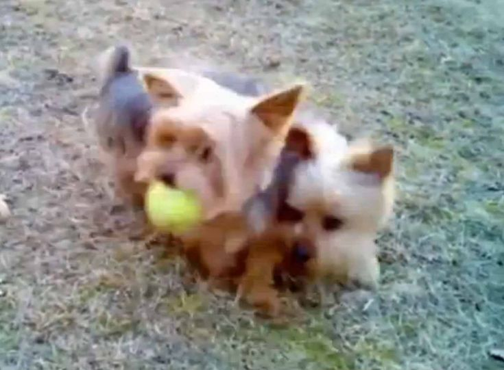 Funny Dogs Video Compilation - Americas Funniest Home Videos