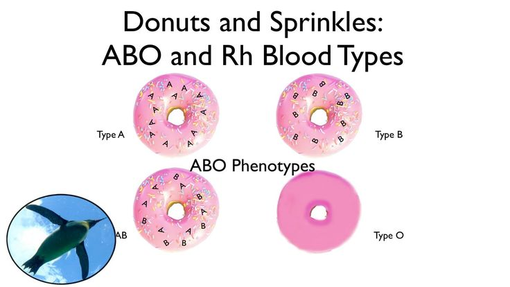All about blood types - ABO and Rh blood groups. Who donates to whom? How are blood types inherited? What are the medical issues involved with transfusions? ...
