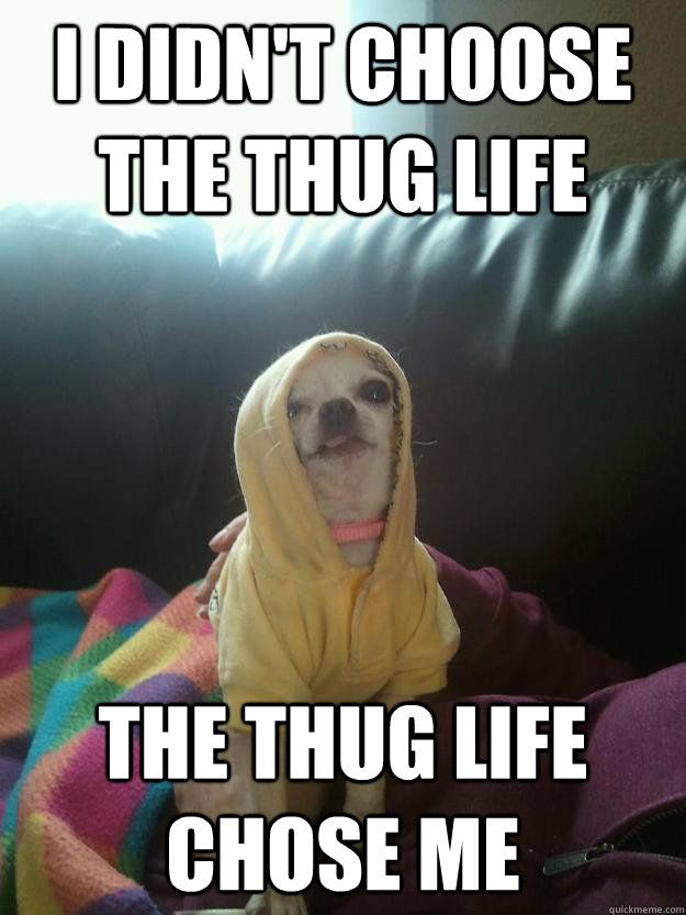 f0c6112b282224cacc2963aabcbac29e thug life book jacket best 20 funny chihuahua quotes ideas on pinterest chihuahua,Chiwawa Meme