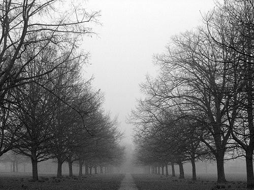 Misty Winter Morning, London