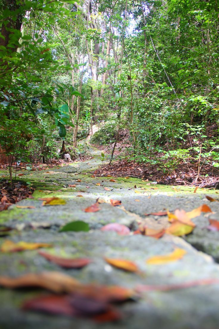 Along the trail at Grenade Hall Forest in Barbados.