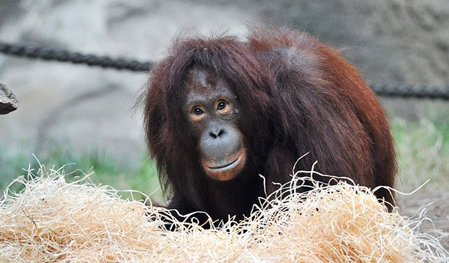 Dinda moves to Rostock Zoo
