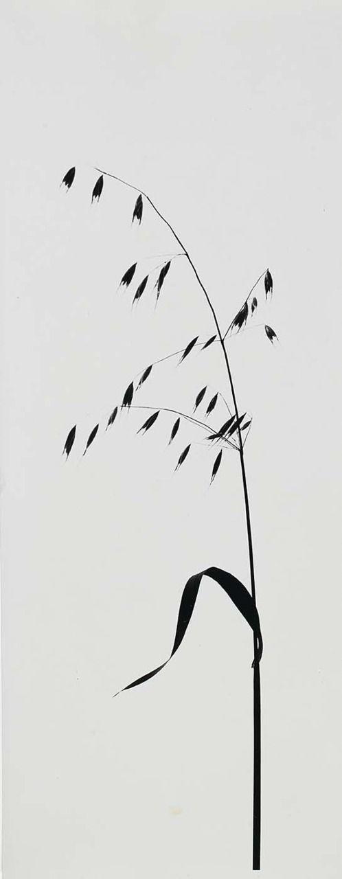 Nodding Brome Grass, New Mexico  1963 Todd Webb