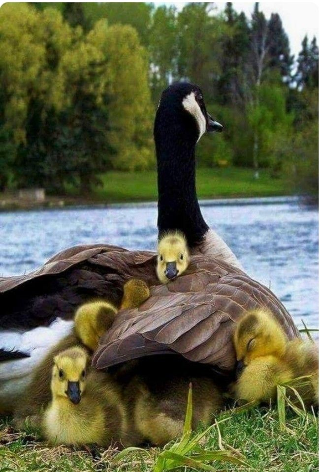 Beautiful birds by Heather Kane on Birds Pet birds, Baby