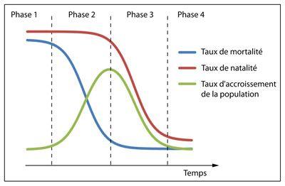 Schéma représentant la dynamique des populations au cours une transition démographique modèle d'une société qui s'industrialise, divisée selon ses quatre phases distinctes.