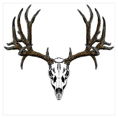Elk skull drawing - photo#12