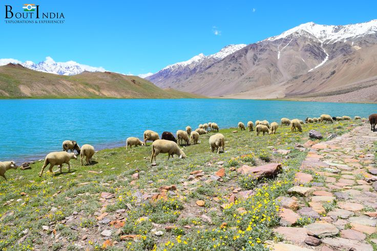 ChandraTal is one of the most enchanting lake in Himalayas. The lake can be visited only during the three summer months. For the rest of the time, it remains frozen.  #triptoindia #tourindia #boutindia #experience #travel #travelindia #summertrip #adventure #adventures #himalaya #himalayas #trek #camping #chandratal #spitivalley #himachal #mountains #mountainlake #journey #travelphotography
