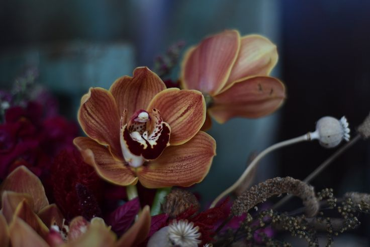 cymbidium orchid and dried poppy pods