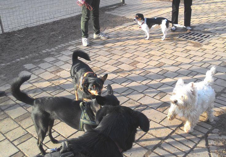 19/02/2016 - Torino con Lea, Zorba, Peja e Axel