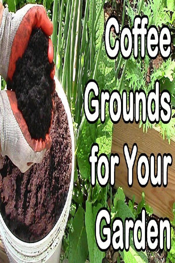 Coffee Grounds Garden Gardening In 2020 Coffee Grounds Garden