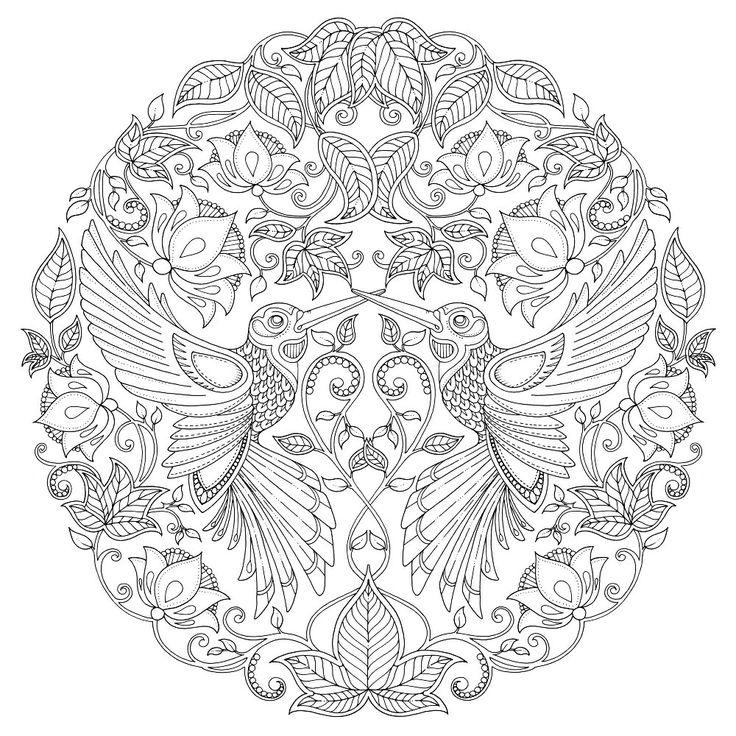 Hummingbird Zentangle Coloring Pages Colouring Adult Detailed Advanced Printable Kleuren Voor