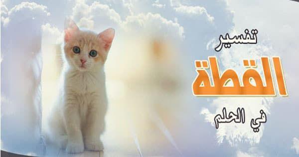 تفسير حلم القطة في المنزل أو طردها وخروجها من المنزل في المنام Cats Animals