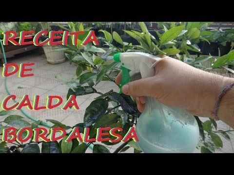Fungos e Ácaros, Como eliminar com a Calda Bordalesa! controle de pragas # 5 - YouTube
