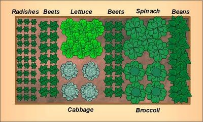 Growing The Home Garden: Gardening in the Home Landscape: Fall Vegetable Garden Layout for a 4'x8' Raised Bed