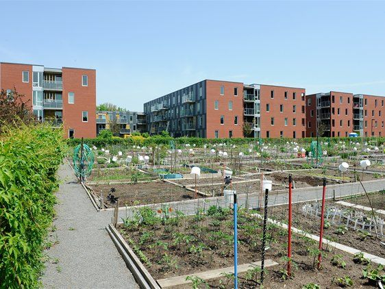 Benny Farm, Montreal, Canada: The central flower and vegetable garden at Benny Farm was always the neighborhood focus of social interaction. Today it has been relocated, but it still plays the same vital role.