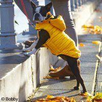 Manteau pour chien Citizen jaune - Manteau pour chien - Bobby / wanimo http://www.wanimo.com/fr/chiens/manteau-compagnie-sc263/manteau-pour-chien-citizen-jaune-sf14870/