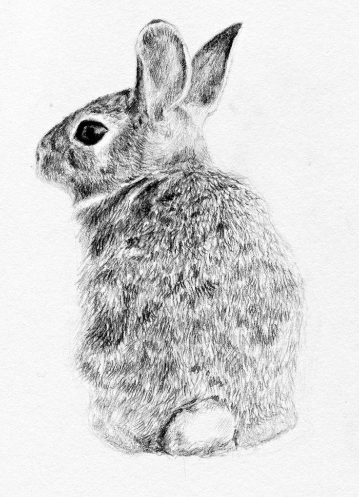 Rabbit Art Print by Anna Shell