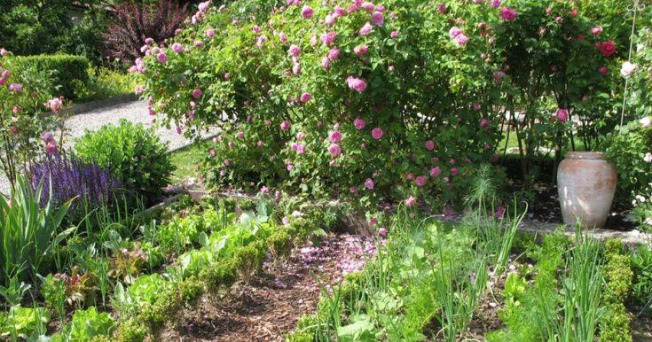 die besten 25 mischkultur ideen auf pinterest petunien hinterhof pflanzen und garten. Black Bedroom Furniture Sets. Home Design Ideas