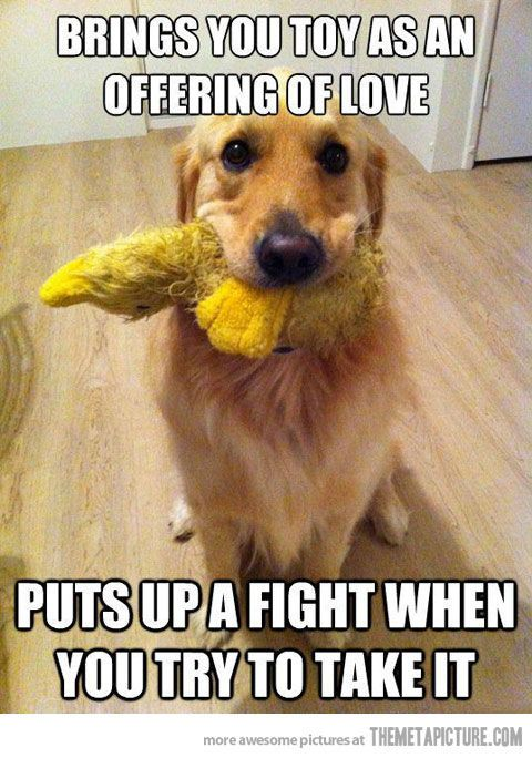 brings you toy as an offering of love...