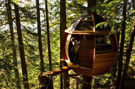 Joel Allen's amazing tree house