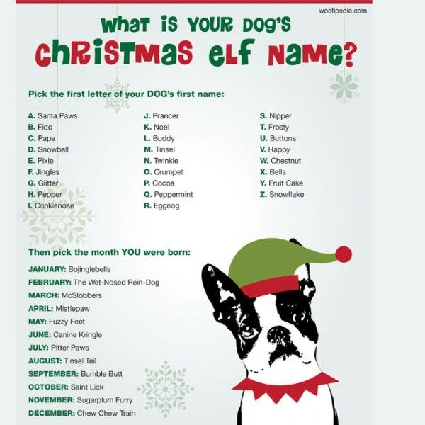 If your pup was an elf, what would his name be? Find out here and be prepared to laugh! #woofipedia #woof