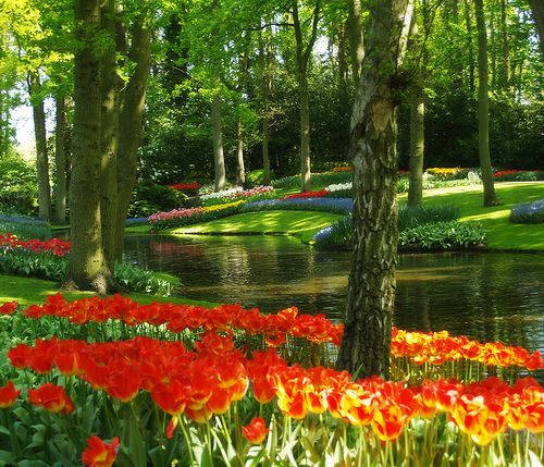 Le parc aux tulipes de Keukenhof