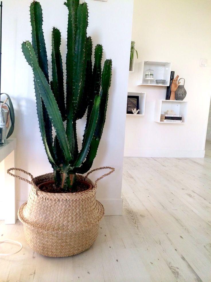 Tendance déco : Quand le cactus habille notre intérieur – La Minute d'Emy Blog Lifestyle