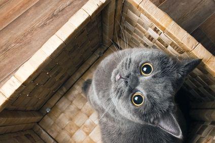 Вредные кошачьи привычки  У кошек есть свои вредные привычки, многие из которых появились задолго до того, как животное стало домашним.  Продолжение статьи на сайте: https://www.magazindoberman.ru/blog/2015/05/21/Vrednye_koshach'i_privychki #Magazindoberman #Doberman #Доберман #Зоотовары #Зоомагазин #интернетмагазин #russia #moscow #Корм #аксессуары #игрушки #ветпрепараты #Питомцы #Cat #Dog #травка #кошка #fun #animal